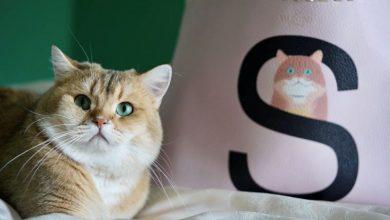 Photo of 手袋印上毛孩的專屬畫像!Valentino新推訂製萌寵系列太可愛了吧?