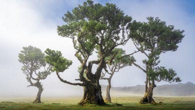 Photo of 全世界最美的森林