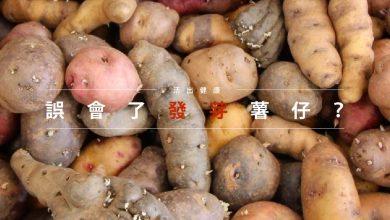 Photo of 活出健康:誤會了發芽薯仔?
