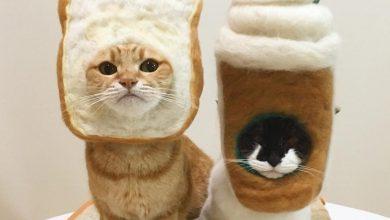 Photo of 日本貓咪大玩Cosplay!甚至化身「吐司」超可愛 網民:讓人好想一口吃下!