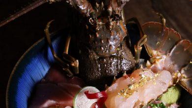 Photo of 【九龍塘日本菜】又一城活龍蝦刺身丼!滿到瀉三文魚籽丼+和牛海膽魚子醬壽司