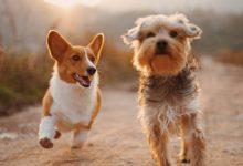 Photo of 每個寵物主人都應該知道的7件事